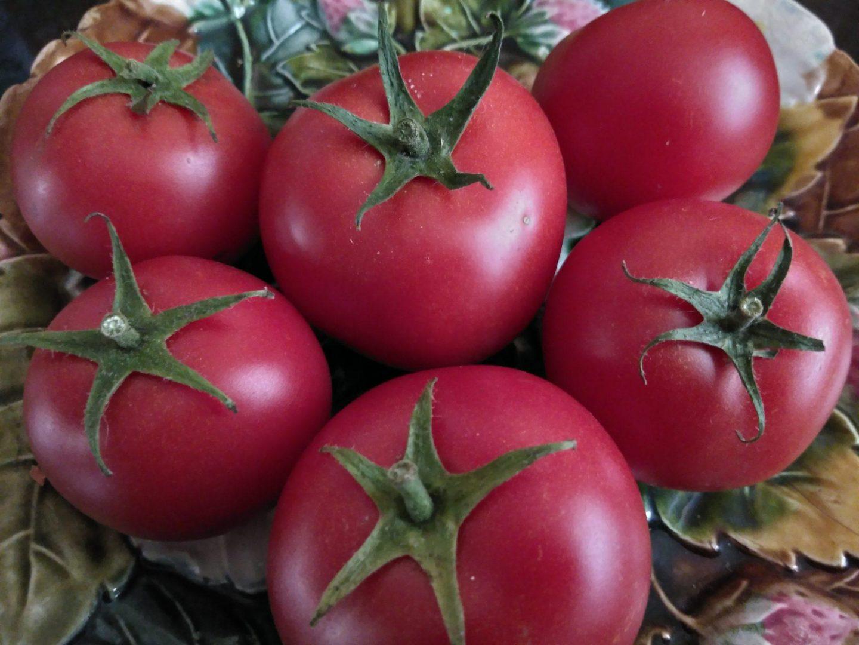 Les tomates du jardin profitent de l'été indien - Crédit photo izart.fr